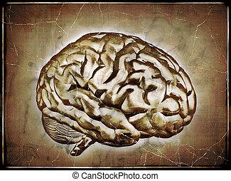 марочный, головной мозг