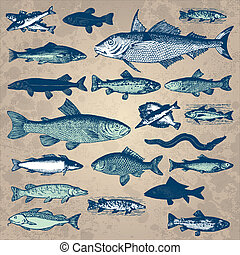марочный, рыба, задавать, (vector)