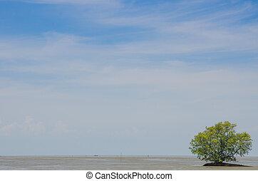 мелкий, дерево, воды, в одиночестве, мангровое дерево, grows