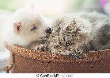 милый, сибирский, кот, персидский, хриплый, лежащий