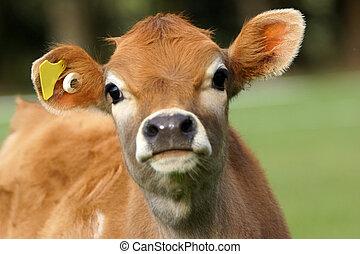 милый, теленок