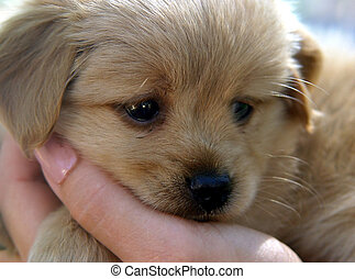 милый, щенок