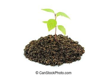 молодой, растение