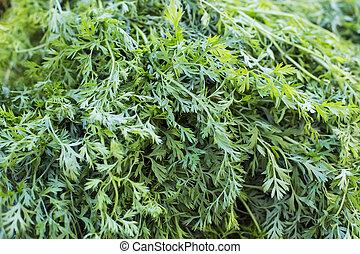 морковь, молодой, зеленый, leaves, текстура