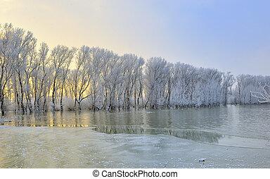 морозный, trees, зима