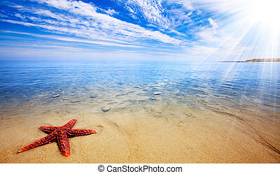 морская звезда, рай