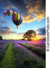 над, летающий, лаванда, воздух, горячий, закат солнца, balloons, пейзаж