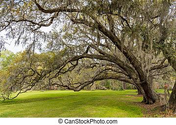 над, лук, жить, зеленый, oaks, трава