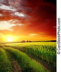 над, поле, зеленый, дорога, сельский, закат солнца, красный