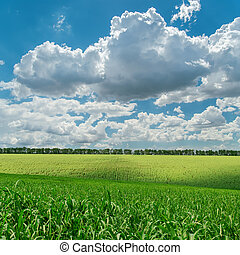 небо, облачный, поле, зеленый, под, сельское хозяйство