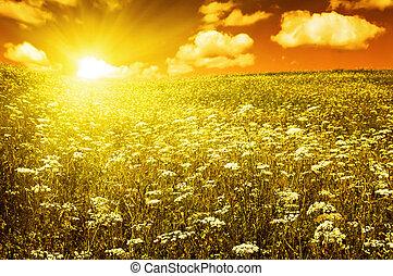 небо, поле, зеленый, blooming, цветы, красный