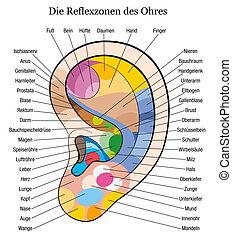 немецкий, ухо, рефлексология, описание