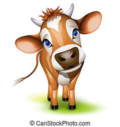 немного, джерси, корова