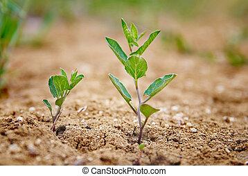 немного, зеленый, растение
