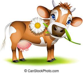 немного, принимать пищу, джерси, корова, маргаритка