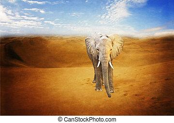 немного, пустыня, слон