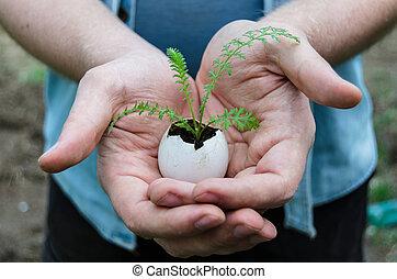 немного, растение
