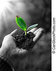 немного, agricolture, концепция, растение