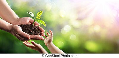 новый, растение, молодой, экологическая, поколение, старый, giving, женщина, ребенок, защита