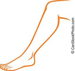 ноги, (woman, женщина, leg)