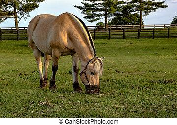 носить, морда, лошадь, grazing
