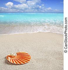 оболочка, карибский, тропический, жемчужный, песок, белый, пляж