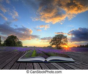 образ, небо, вибрирующий, clouds, поля, приход, вне, красивая, pages, книга, атмосферный, сельская местность, оглушающий, закат солнца, над, магия, созревший, творческий, пейзаж, английский, лаванда, концепция