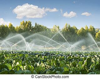 овощной, орошение, сад, systems