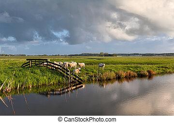 овца, выгон, река, пасти