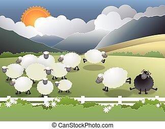 овца, поле, черный