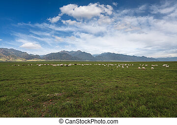 овца, синий, небо, пасти, под, луг