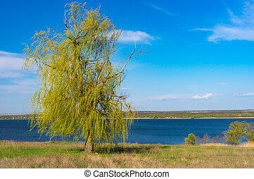 одинокий, ива, берег реки, рыдание, безоблачный, dnepr, небо, синий, дерево, против
