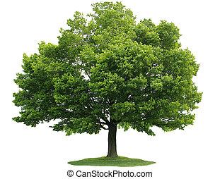 один, дерево
