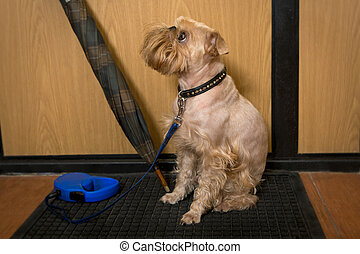 ожидание, ходить, собака