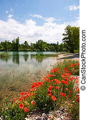 озеро, красный, poppies