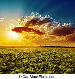 оранжевый, поле, сельское хозяйство, зеленый, закат солнца