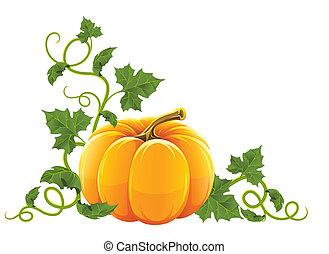 оранжевый, созревший, овощной, тыква