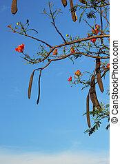 оранжевый, цветок, против, sky.