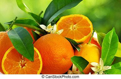 оранжевый, цветы, fruits