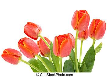 оранжевый, tulips