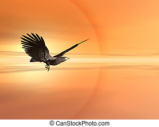 орел, американская, плешивый