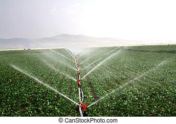 орошение, образ, капельный, поле, systems, сельскохозяйственное