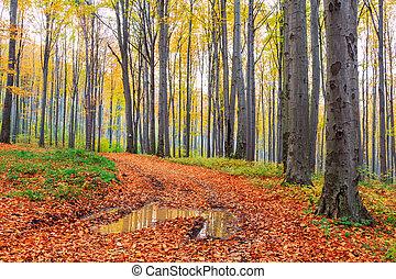 осень, бук, лес, падать
