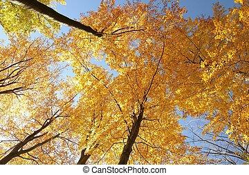 осень, бук, trees