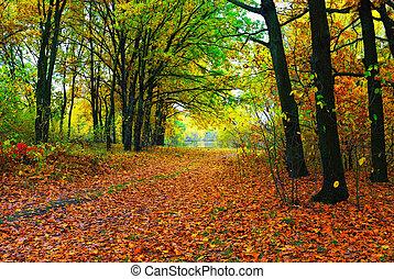 осень, дорожка, красочный, trees