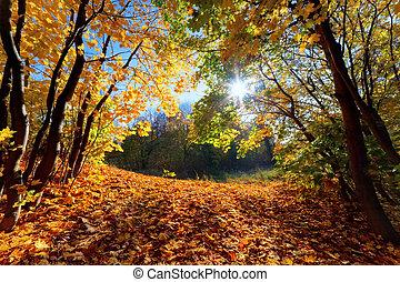 осень, лес, пейзаж, падать