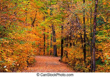 осень, след, через, trees