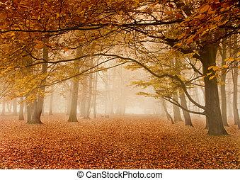 осень, туманный