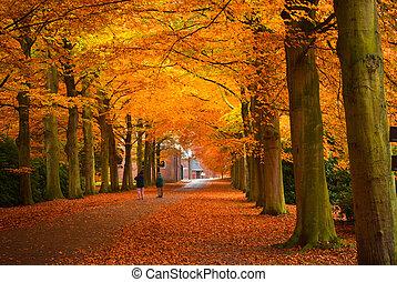 осень, colors
