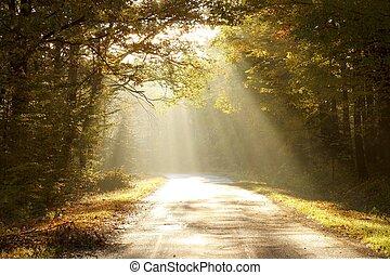 осень, enchanted, рассвет, лес